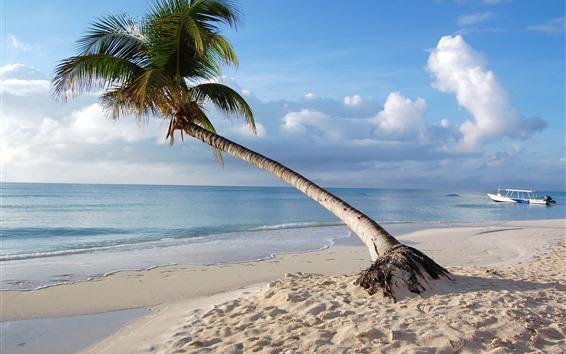 Fond d'écran Maldives, palmier solitaire, mer, plage