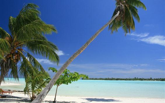 Hintergrundbilder Malediven, Palmen, Strand, Meer