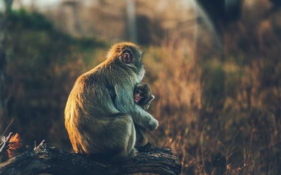 Обои Обезьяна и детеныш обезьяны