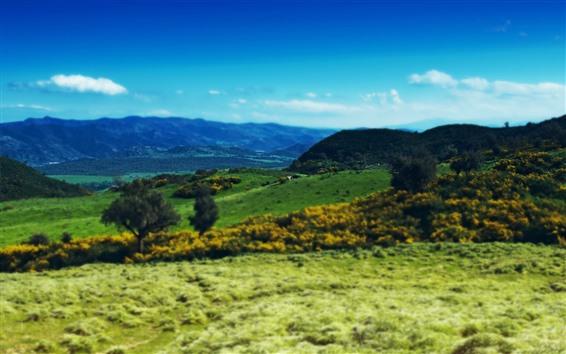 Обои Горы, даль, зелень, склон, коровы
