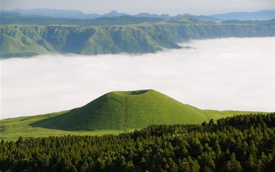 Обои Горы, лес, зелень, туман, Кумамото, Сомма, Япония