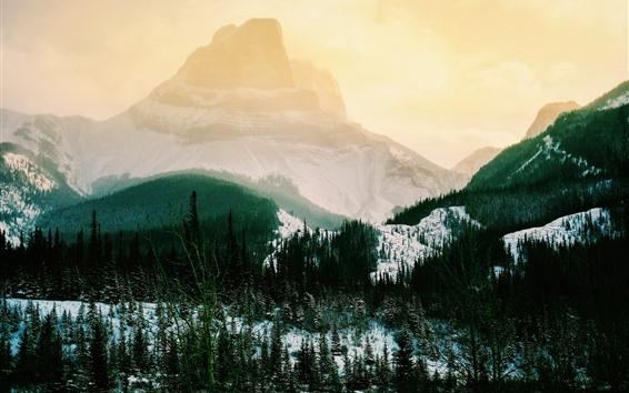 Papéis de Parede Montanhas, neve, árvores, nevoeiro, inverno