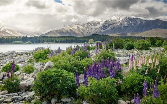 배경 화면 뉴질랜드, 산, 꽃, 호수, 돌, 숲