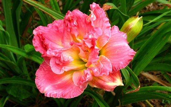 Fondos de pantalla Primer plano de orquídea, pétalos de rosa, hojas