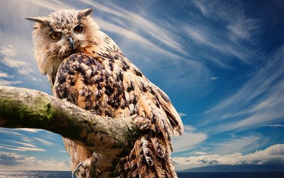 Fond d'écran Chouette regarde en arrière, plumes, ciel bleu