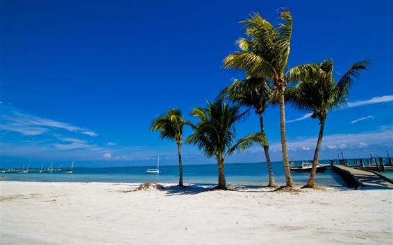 Wallpaper Palm trees, beach, sea, tropical, pier, boats