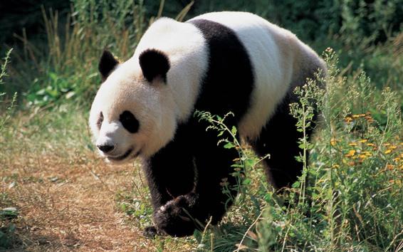 Papéis de Parede Caminhada de panda, flores