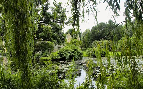 壁紙 公園、柳、池、緑