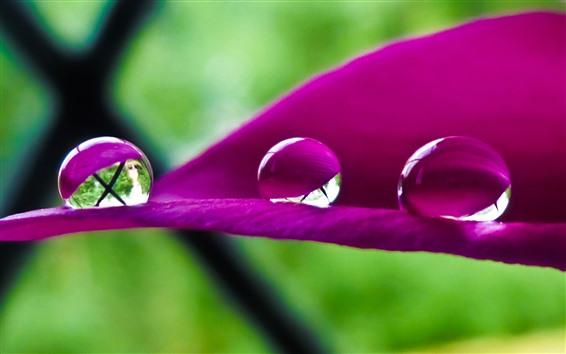 Wallpaper Pink flower petal close-up, three water droplets