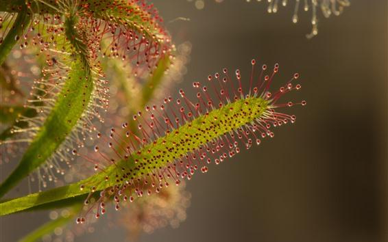 Papéis de Parede Macro fotografia de plantas, gavinhas