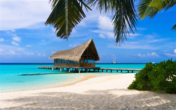 Wallpaper Resort, beach, palm trees, sea, hut, pier