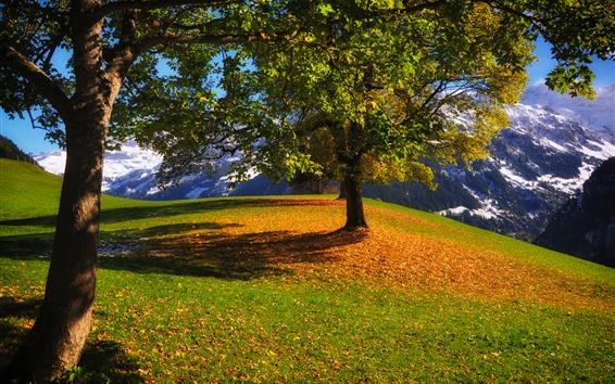 Wallpaper Trees, mountain, grass, snow, sunshine, shadow