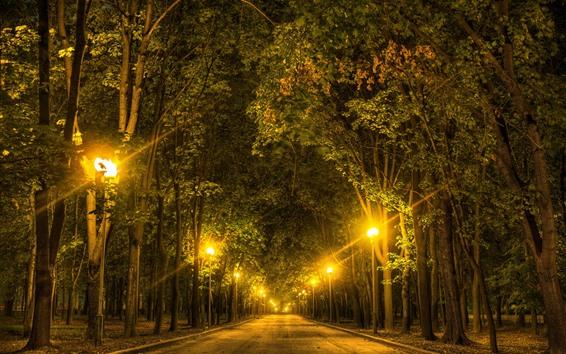 Wallpaper Trees, road, lights, night