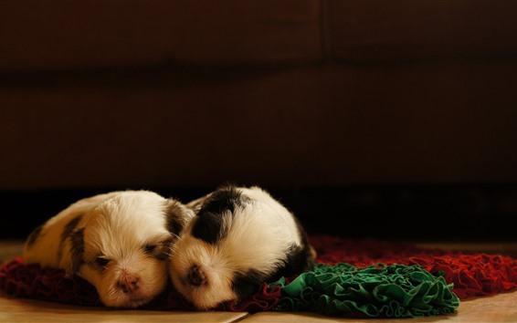 Обои Два милых щенка спят