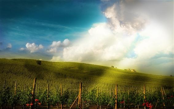 Wallpaper Vineyard, slope, houses, sunshine