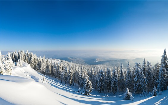 Wallpaper Winter, snow, forest, trees, mountain top, sunshine