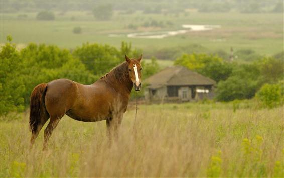 Wallpaper Brown horse look back, grass, hut