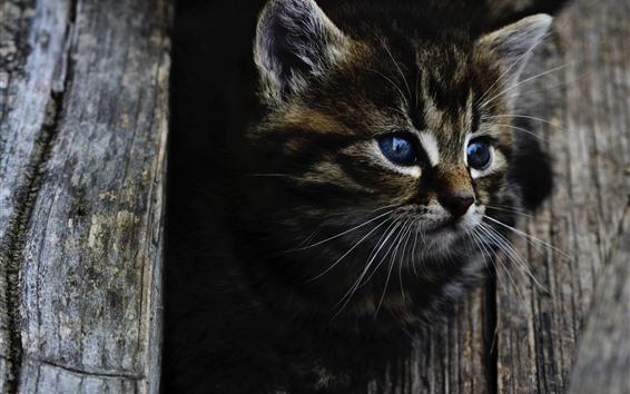 Обои Милый серый котенок, голубые глаза, взгляд, дерево