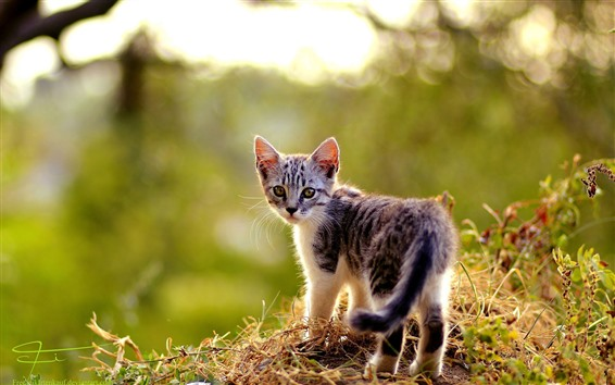 Wallpaper Cute kitten look back, summer
