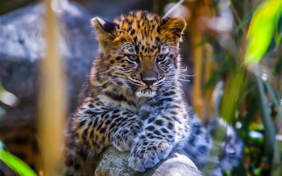 桌布 可愛的豹寶寶