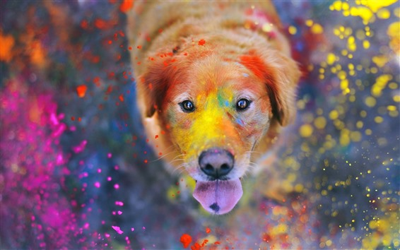 Wallpaper Dog, face, eyes, colorful paint