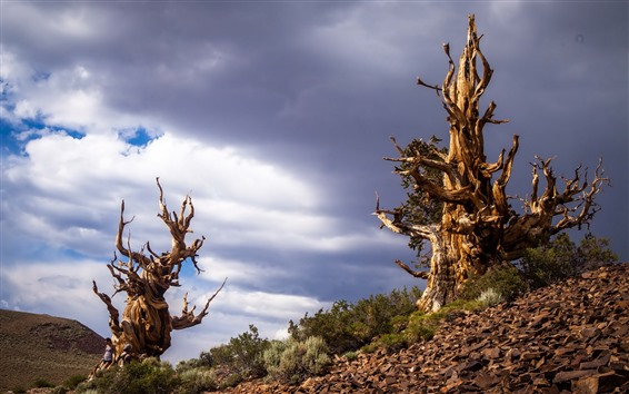 Papéis de Parede Árvores secas, arbustos, céu, nuvens