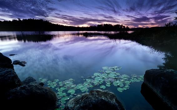Обои Сумерки, озеро, водяная лилия, камни, силуэт
