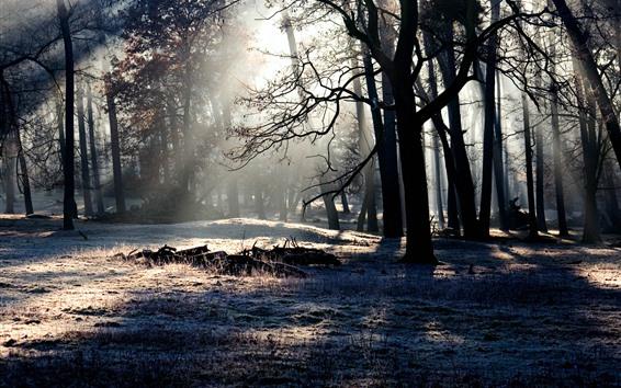 Обои Лес, деревья, тень, солнечные лучи