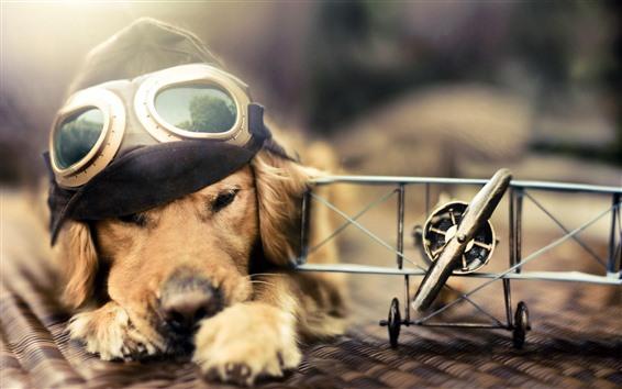 Wallpaper Funny dog, pilot, plane