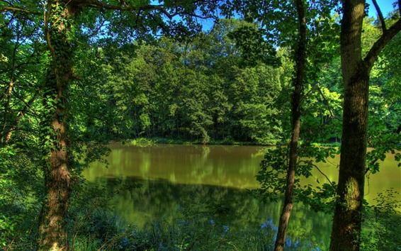 Wallpaper Germany, river, trees, green, nature scenery