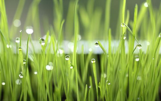 Обои Зеленая трава, роса, природа