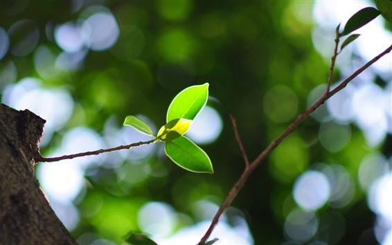 Обои Зеленые листья, веточки, туманный фон