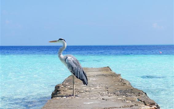 Papéis de Parede Garça-real, pássaro, mar azul