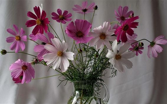Fond d'écran Fleurs Kosmeya, vase