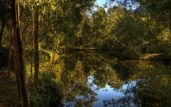 Wallpaper Lake, forest, trees, clear water, nature, reflection