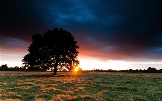 Papéis de Parede Árvore solitária, pôr do sol, nuvens, grama