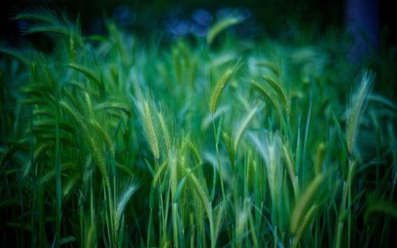 Обои Много зеленой травы, природа