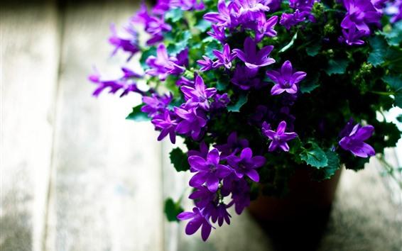 Обои Много маленьких фиолетовых цветов, ваза, туманная