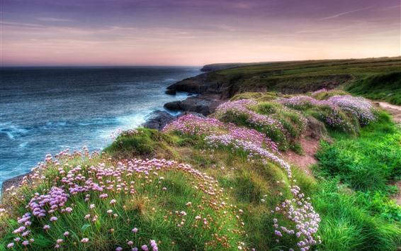 Papéis de Parede Muitas flores cor de rosa, mar, grama, natureza