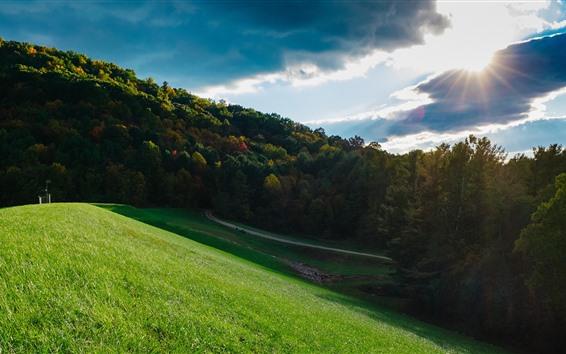 Обои Луг, зеленая трава, деревья, солнце, облака
