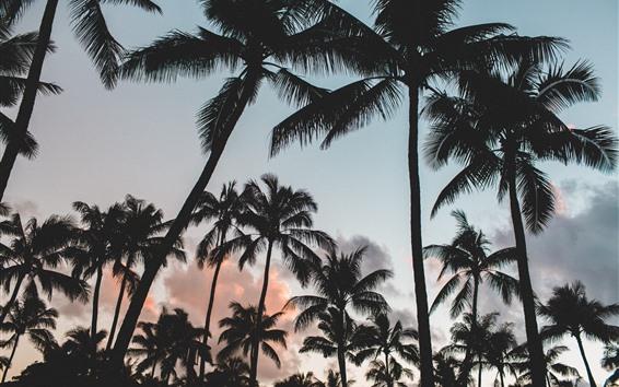 Обои Пальмы, силуэт, облака, сумерки