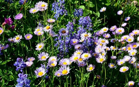 Обои Розовые и фиолетовые цветы, полевые цветы