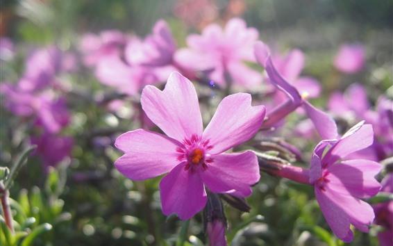 壁紙 ピンクの花、花びら、日差し