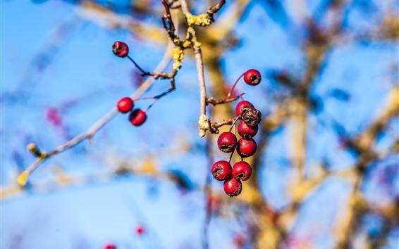 Обои Красные ягоды, веточки, туманный фон