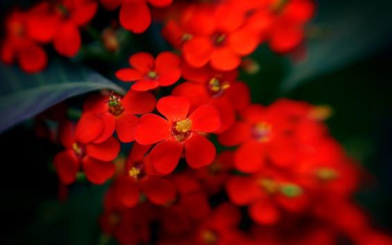 Wallpaper Red little flowers, hazy