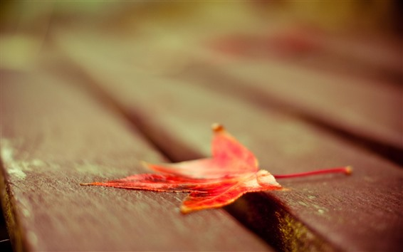 Wallpaper Red maple leaf, bench, hazy