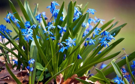 배경 화면 푸른 난초, 녹색 잎