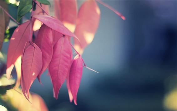 Обои Некоторые красные листья, туманный фон, осень