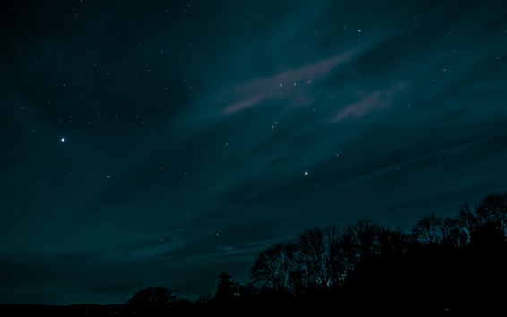 Wallpaper Starry, sky, night, trees, silhouette