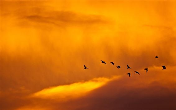 Fondos de pantalla Puesta de sol, pájaros, nubes, cielo, color naranja